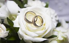 White rose+wedding rings  553
